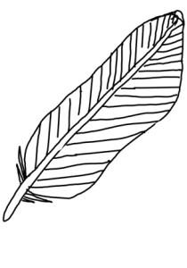 Feather / Feder